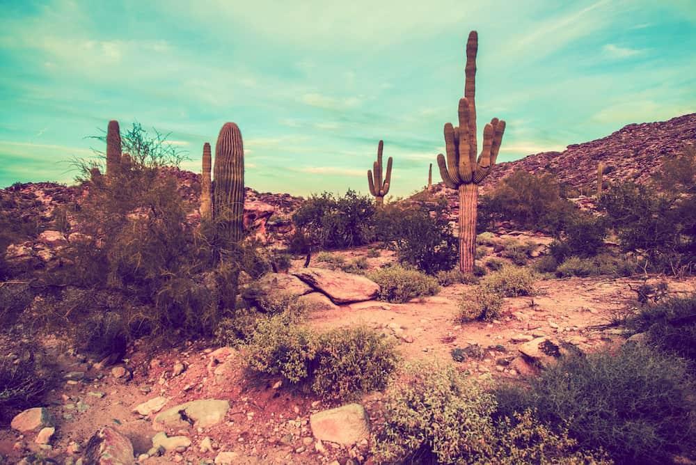 Metal Detecting in Arizona